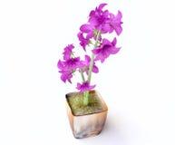 Rosafarbene Hyazinthen in einem Flowerpot Stockfotografie