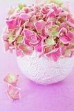 Rosafarbene Hydrangeablumen Stockbilder
