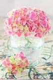 Rosafarbene Hydrangeablumen Stockbild