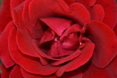 Rosafarbene Innere des Rotes Lizenzfreie Stockfotos