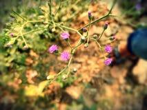 Rosafarbene kleine Blume Stockbild