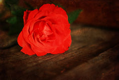 Rosafarbene Knospe des Retro- Effektfotos Lizenzfreies Stockbild
