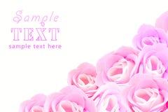 rosafarbene Knospen der Rosen Lizenzfreies Stockbild