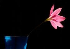 Rosafarbene Lilienblume in der Blüte stockfotografie