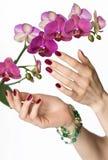 Rosafarbene Maniküre, Orchidee, grüne Korne stockbild