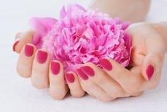 Rosafarbene Maniküre und eine Blume lizenzfreies stockfoto