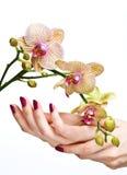 Rosafarbene Maniküre und Orchidee stockfotos