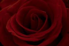 Rosafarbene Nahaufnahme des Rotes Lizenzfreie Stockbilder