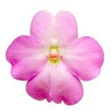 Rosafarbene Orchidee Stockbilder