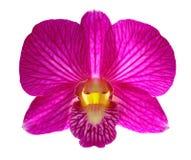 Rosafarbene Orchidee Stockfotos