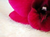 Rosafarbene Orchidee auf weißem Pelz 2 stockbild