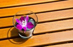 Rosafarbene Orchidee im Glas stockbilder