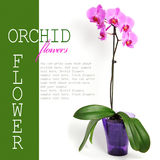 Rosafarbene Orchideeblume Stockfoto