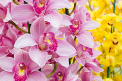 Rosafarbene Orchideeblumen Stockbild