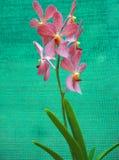 Rosafarbene Orchideen Stockfotos