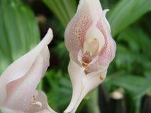 Rosafarbene Orchideen Lizenzfreies Stockbild