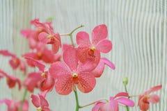 Rosafarbene Orchideen der Blumen lizenzfreies stockfoto
