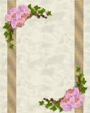 Rosafarbene Orchideen und Efeueinladung Stockfotografie