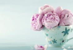 Rosafarbene Pfingstroseblumen Stockfoto