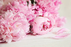 Rosafarbene Pfingstroseblumen auf hölzerner Oberfläche Stockfotografie