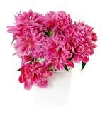 Rosafarbene Pfingstroseblumen im weißen Vase Stockfotografie