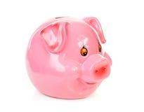 Rosafarbene piggy Querneigung Stockbild