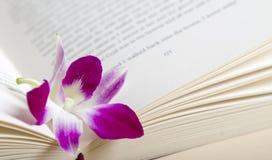 Rosafarbene purpurrote Orchideeblume, die in einem Buch stillsteht stockfotografie