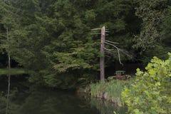 Rosafarbene Reflexionen des Sees lizenzfreie stockfotografie