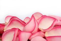 Rosafarbene rosafarbene Blumenblätter Stockfotos