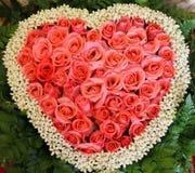 Rosafarbene Rose Lizenzfreie Stockbilder