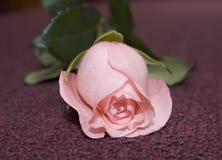 Rosafarbene Rose auf dem Teppich Stockbild