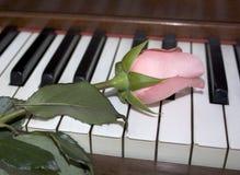 Rosafarbene Rose auf den Klaviertasten Lizenzfreies Stockbild