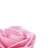 Rosafarbene Rose getrennt Stockfotografie