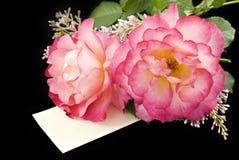 Rosafarbene Rosen auf schwarzem Hintergrund Stockbilder