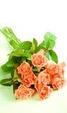 Rosafarbene Rosen auf weißem Hintergrund Stockfotografie