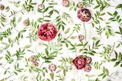 Rosafarbene Rosen auf weißem Hintergrund Stockfoto