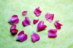 Rosafarbene Rosen-Blüten zerstreut auf grünen Hintergrund Lizenzfreies Stockbild