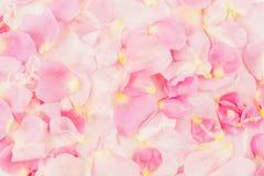 Rosafarbene Rosen-Blumenblätter 01 Flache Lage, Draufsicht Hintergrund der Blumenblätter Lizenzfreies Stockfoto