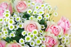 Rosafarbene Rosen der Blüte lizenzfreie stockbilder