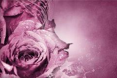 Rosafarbene Rosen - Hintergrund Lizenzfreies Stockbild