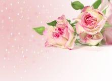 Rosafarbene Rosen mit atars und Leuchten Stockfotografie