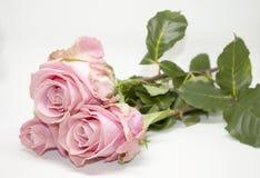 Rosafarbene Rosen Romantisches Geschenk Stockfotografie