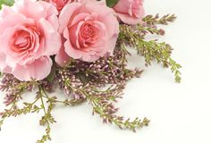 Rosafarbene Rosen und lila weißer Hintergrund Lizenzfreie Stockbilder