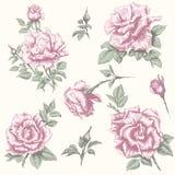 Rosafarbene Sammlung der Weinlese Stockbild