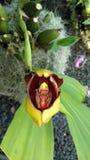 Rosafarbene schöne Blume Stockfoto