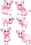 Rosafarbene Schweine. Stockfoto