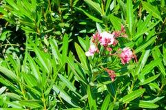 Rosafarbene tropische Orchideen stockfoto