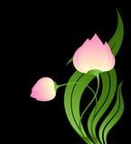 Rosafarbene Tulpe stock abbildung