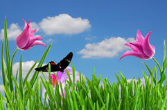 Rosafarbene Tulpe unter blauem Himmel Stockfotografie