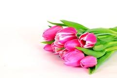 Rosafarbene Tulpeblumen Stockfoto